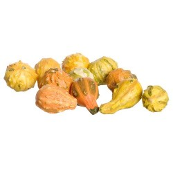 1/2in ASSORTED SQUASH/11