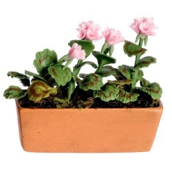 PINK GERANIUM IN WIND.BOX