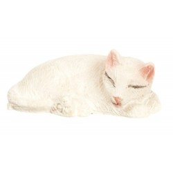 WHITE CAT/SLEEPING