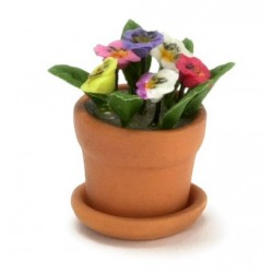 PANSY IN TERRA COTTA POT