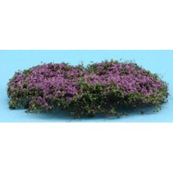 CREEPING PHLOX, PURPLE