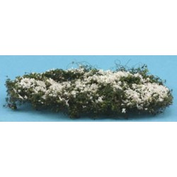 CREEPING PHLOX, WHITE