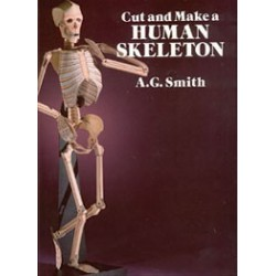 CUT & MAKE HUMAN SKELETON