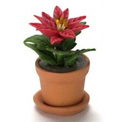 POINSETTIA IN POT, 1 RED FLOWER