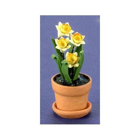 YW-OR DAFFODIL IN POT