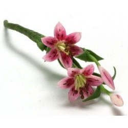 TIGER LILY, 2 LARGE STEM, PINK