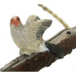 RED EARED WAX BILL