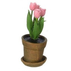 TULIP IN AGED POT, PINK
