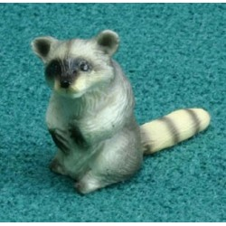 RINGTAIL RACCOON