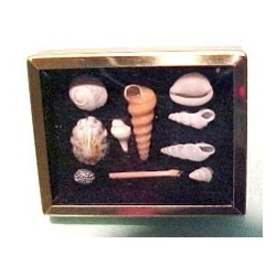 FRAMED SHADOW BOX WITH SHELL COLLECTION