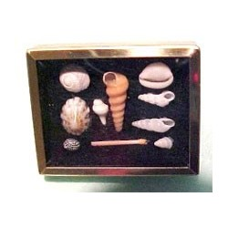 SHADOW BOX W/SHELL COLLECTION - BLACK