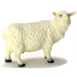 Sheep/male