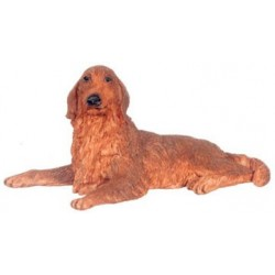 Brown Irish Setter