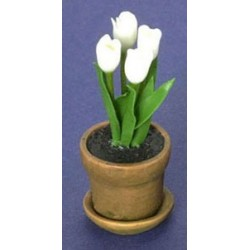 Tulip In Aged Pot White