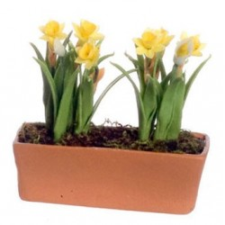 Daffodils In Window Box Yellow