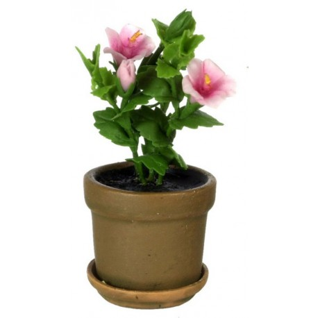 Hibiscus In Pot/pink
