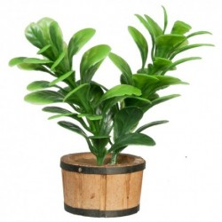 Large Green House Plant