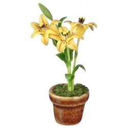 Lilies In Pot/yellow